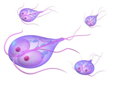 Giardia Diarrhea and IBS