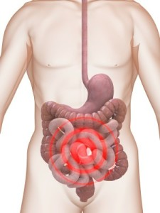 A diagram of the human digestive system from throat to rectum.