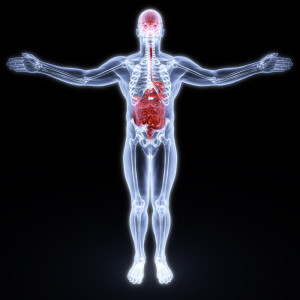 Transparent man showing the brain gut connection.