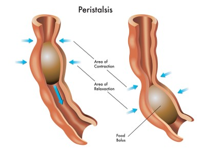 What is Peristalsis, and Why Should I Care?